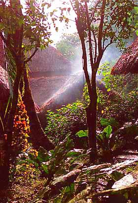 View of a Rainforest